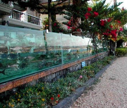забор из аквариумов