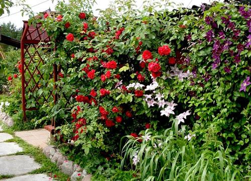 живая изгородь из однолетних растений