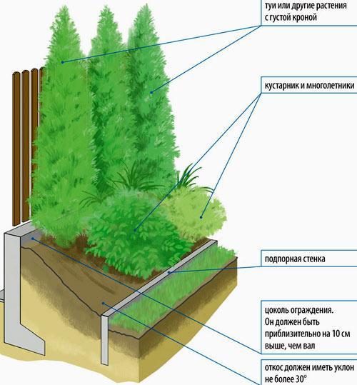 схема живой изгороди