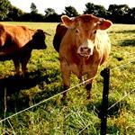 Электроизгороди для скота