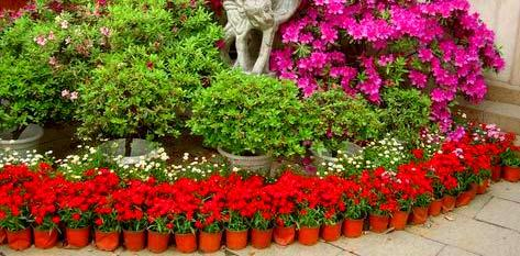 ограда из цветочных горшков