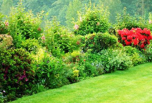 посадка кустарников