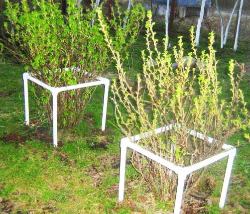 Как огородить кусты своими руками