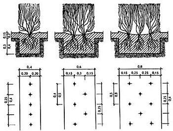Схемы по живой изгороди