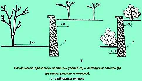 кустарник забор