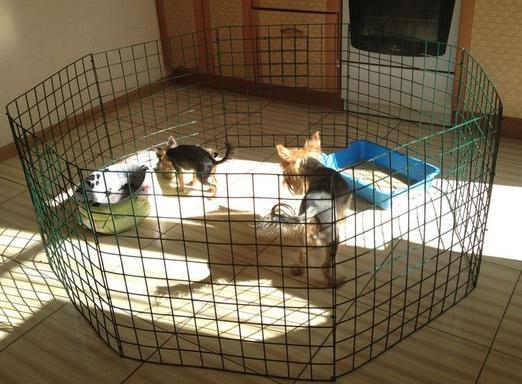 ограждения для щенков
