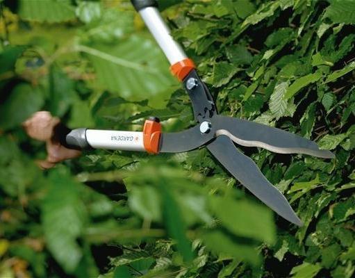 ножницы живая изгородь