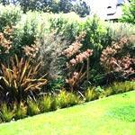 Зеленая изгородь на садовом участке