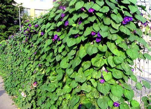 Как и чем украсить забор на даче своими руками фото 88