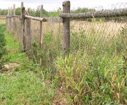 сетка забор